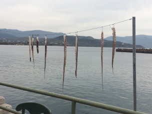 3-16 octopus legs